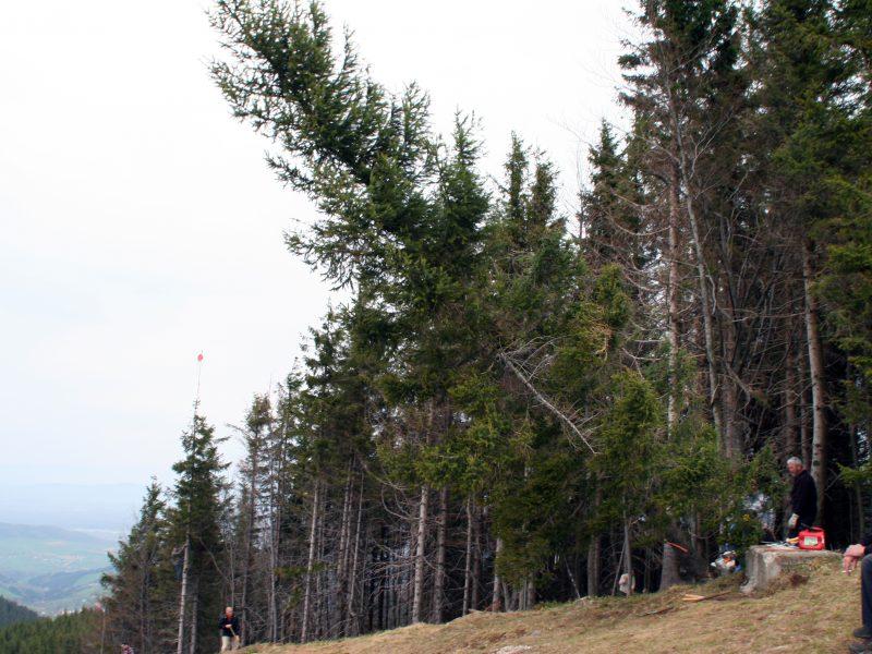 Baumrettungsübung und Austausch mit der Bergwacht Freiburg